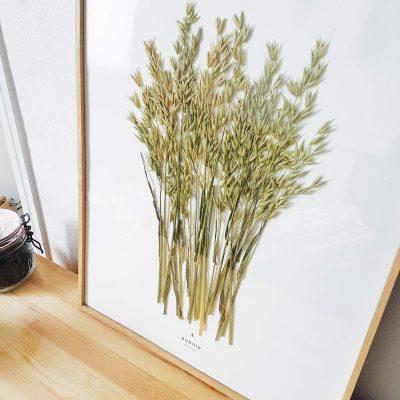Herbier Avoine Byzantine #MUSIQUE 40 x 50 cm - Herbier encadré PARIS