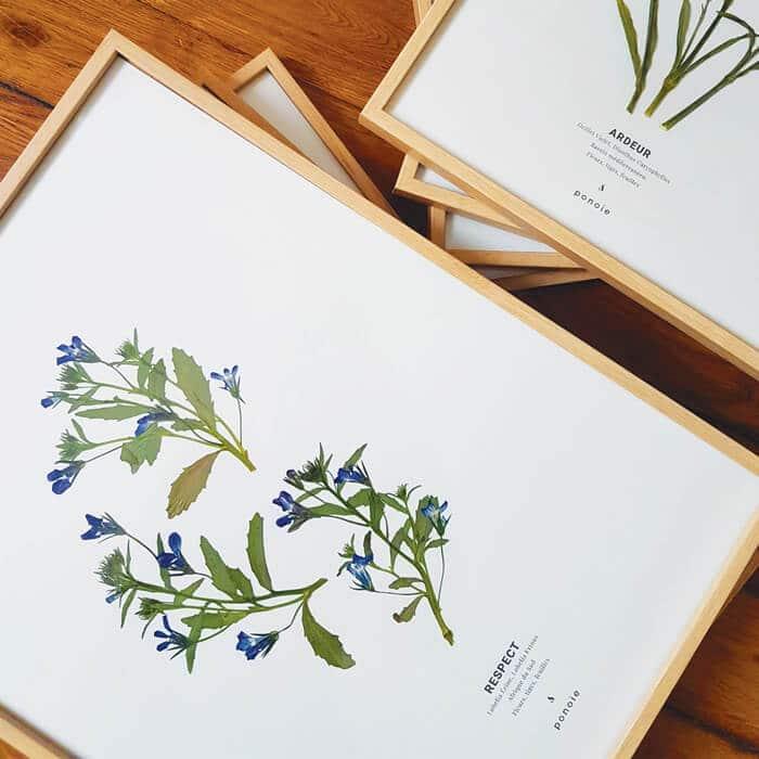 Herbier Lobelia Érine #RESPECT 30 x 40 cm - Herbier encadré PARIS
