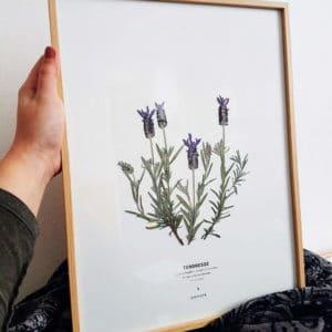 Herbier Lavande Papillon 30 x 40 cm - Herbier fleuri PARIS