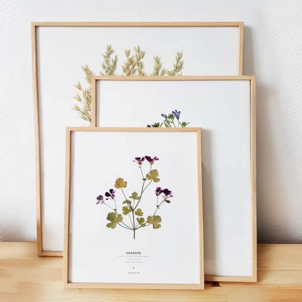 Herbier fleuri PARIS - Herbier botanique france