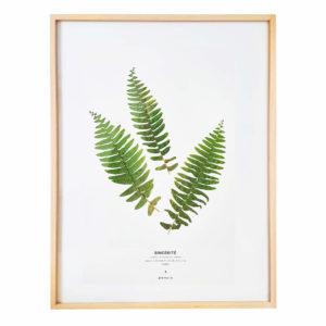 Herbier Botanique Fougère 30 x 40 cm - Herbier fleuri PARIS