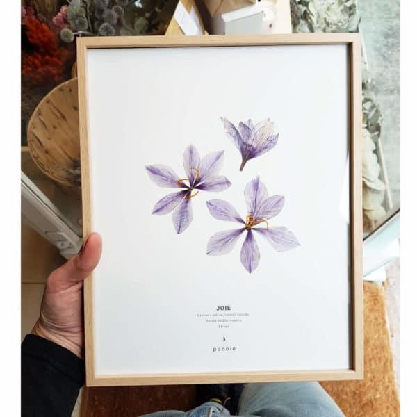Herbier Crocus #JOIE 24 x 30 cm - Herbier botanique fleurs séchées