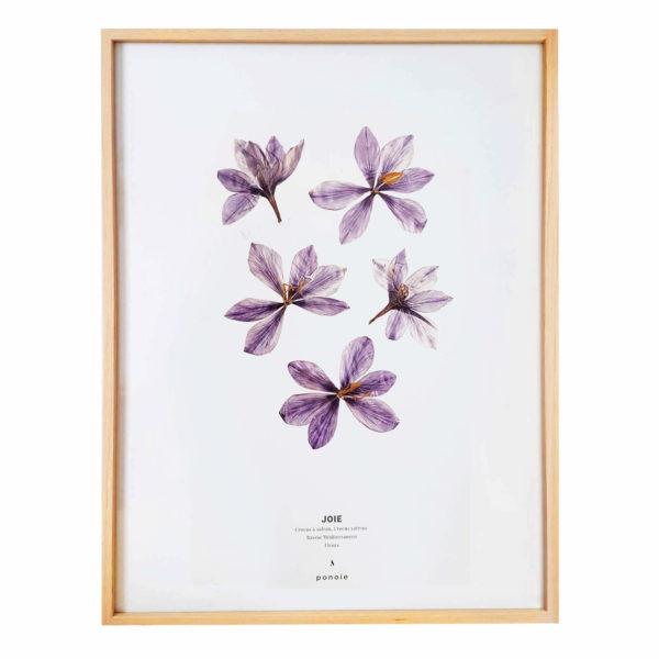 Herbier Crocus #JOIE 30 x 40 cm - Herbier botanique fleurs séchées