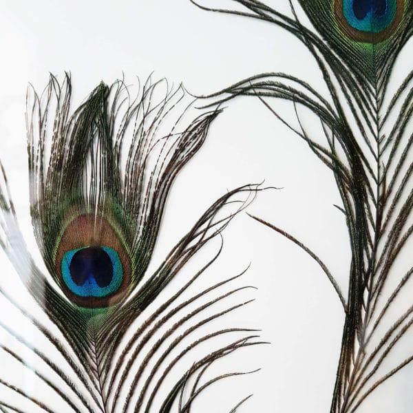 Plumier Grandes plumes de Paon #RENOUVEAU - Plumes éthiques