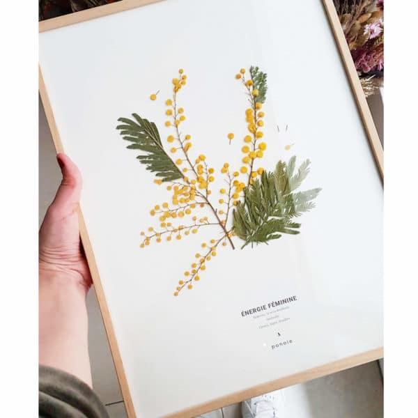Herbier Mimosa #ÉNERGIE FÉMININE 30 x 40 cm - Herbier fleuri symbole