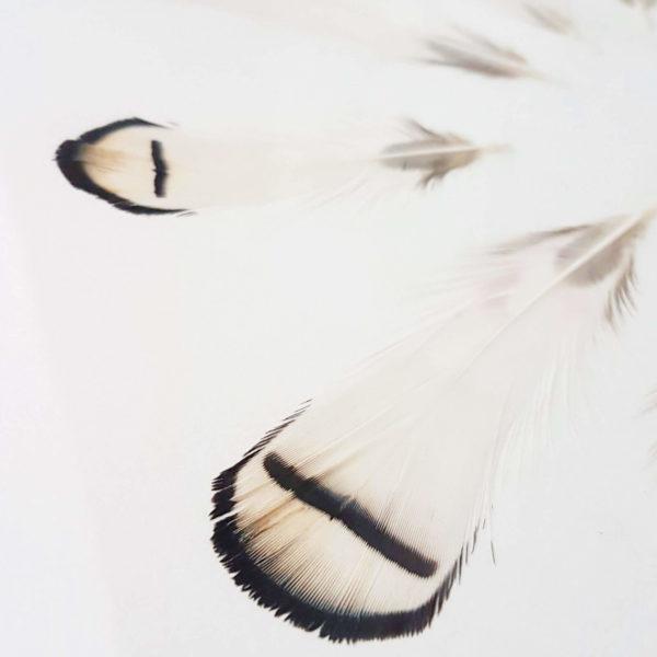 Plumier Faisan argenté #FÉMINITÉ 30 x 40 cm - Plumes sous verre