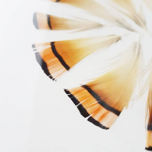 Plumier Faisan doré #FÉMINITÉ 30 x 40 cm - Plumes sous verre