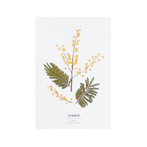 Carte postale Mimosa Énergie - Carte postale fleurie PARIS