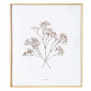 Herbier Gypsophile #BONHEUR 40 x 50 cm - Herbier botanique PARIS