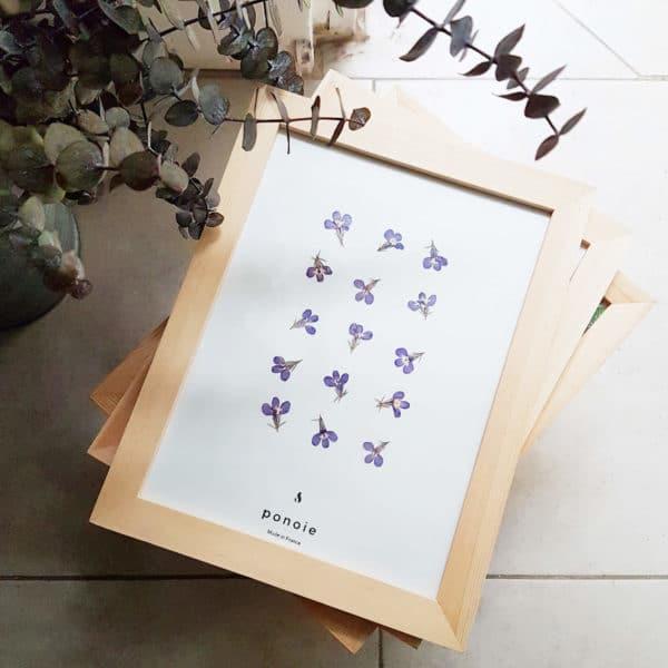 Herbier Lobélie #RESPECT 18 x 28 cm - Herbier fleuri PARIS