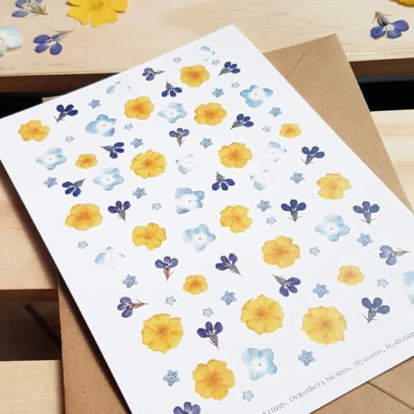 Carte postale Hortensia, lobélie, onagre - Carte postale fleurie PARIS