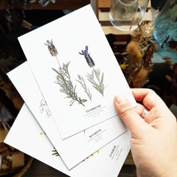 Carte postale Lavande Papillon Tendresse - Carte postale fleurie PARIS