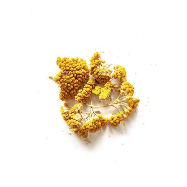 Fleurs séchées d'Achillée Jaune - Réalisez vos bougie DIY