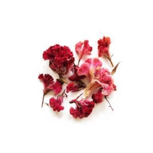 Fleurs de Célosie Rose - Réalisez vos bougie DIY - KIT BOUGIE DIY