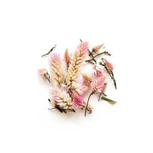 Fleurs séchées de Célosie Flamingo - Réalisez vos bougie DIY