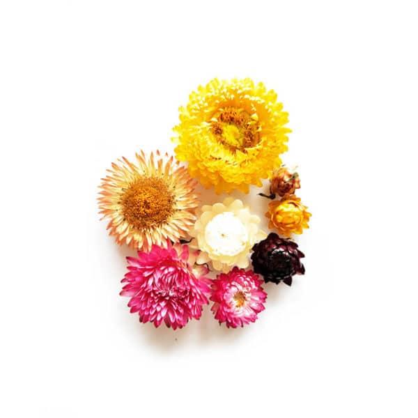 Fleurs séchées d'Immortelles - Réalisez vos bougie DIY - KIT BOUGIE DIY